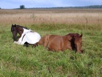 Какие животные спят стоя