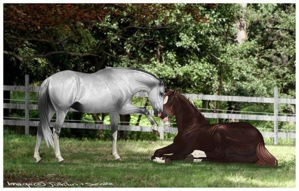 Дрессировка лошадей: как лучше обучить в домашних условиях, правила и книги