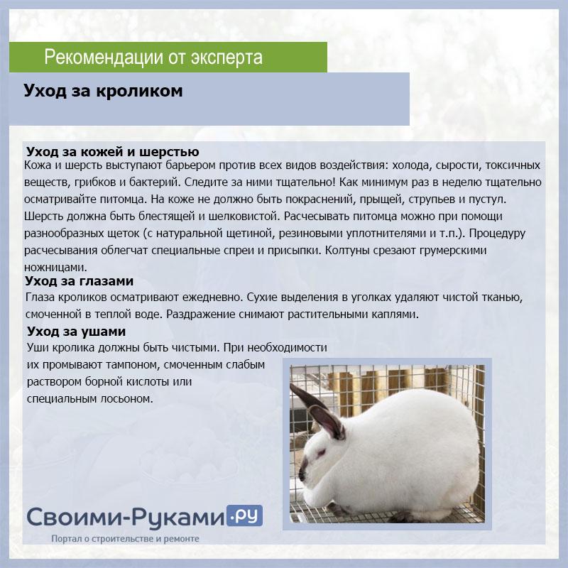 Можно ли кормить кроликов овсом: в чём польза, как правильно давать