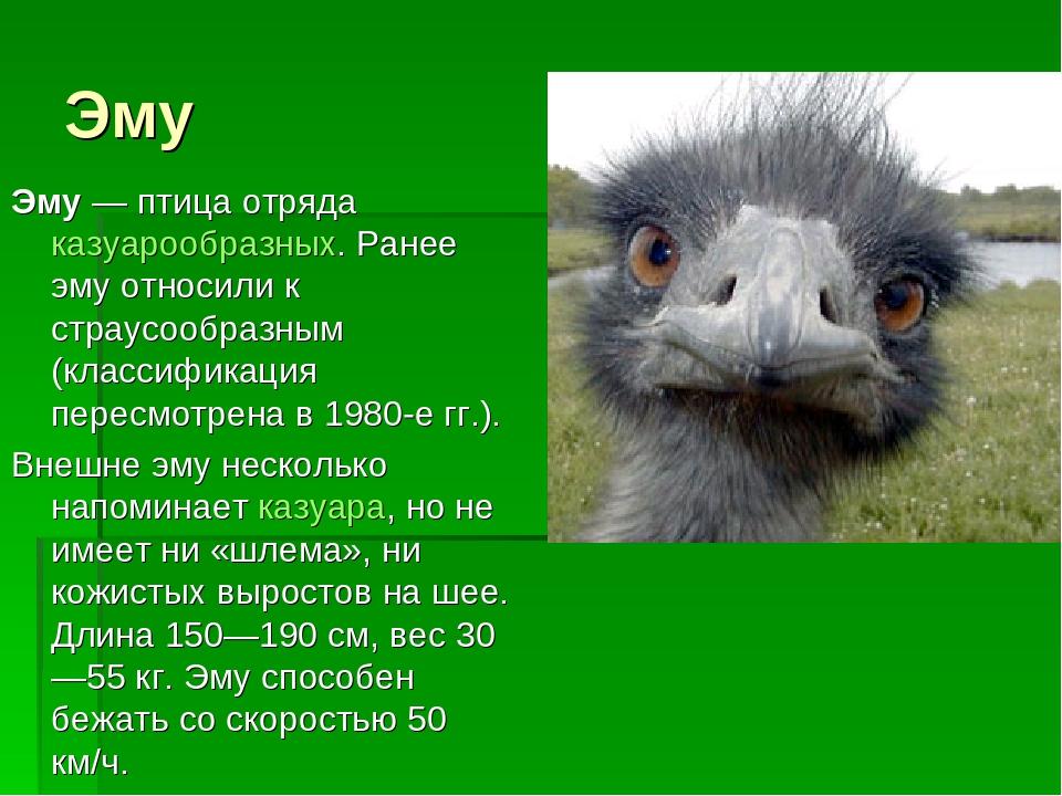 Кто такой страус: птица или животное?