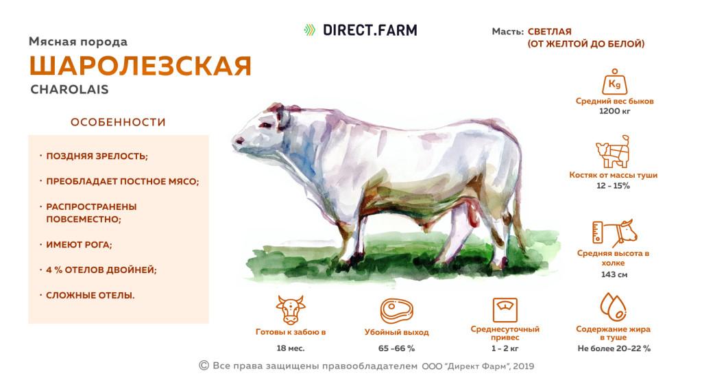 Черно-пестрая порода коров – характеристика скота и особенности молочной продуктивности