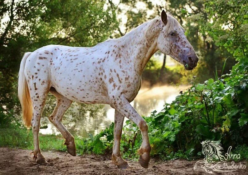 Расписные лошадки: все о пегой масти