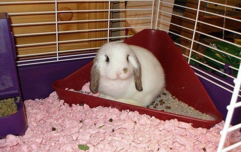 Милые и пушистые: самые красивые декоративные кролики