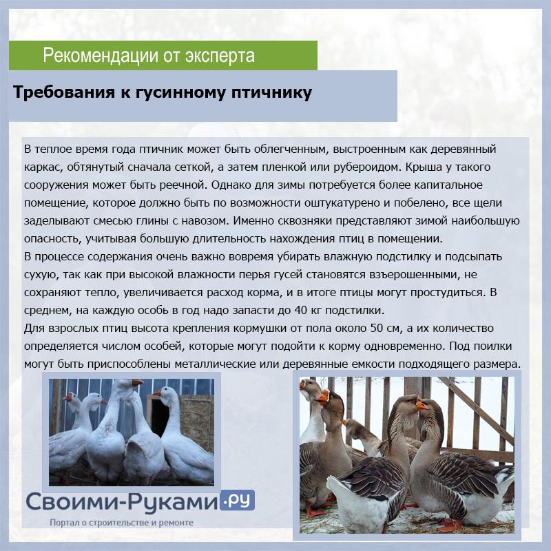 Разведение гусей: особенности и специфика — cельхозпортал