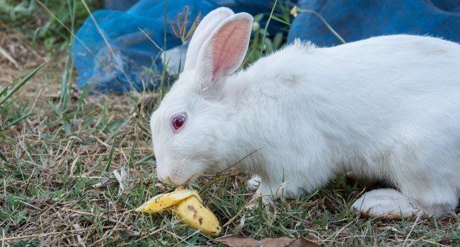 Какую траву можно и нельзя давать кроликам