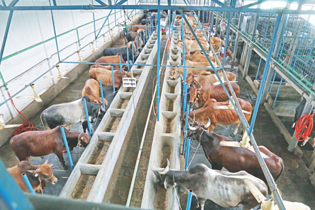 Быстрый откорм бычков на мясо в домашних условиях – рацион кормления