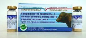 Лептоспироз крс: симптомы и лечение, профилактика (вакцина)