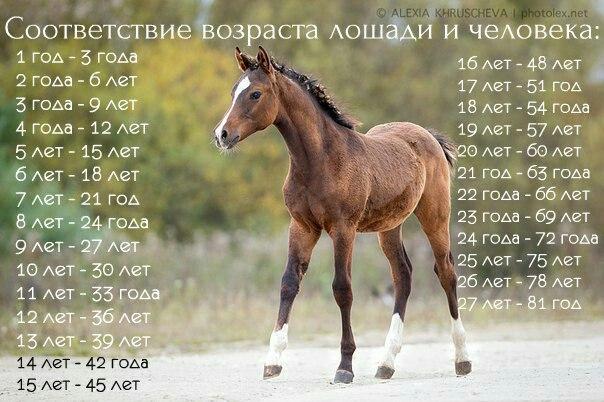 Сколько живут лошади в диких и домашних условиях — что влияет, как определить