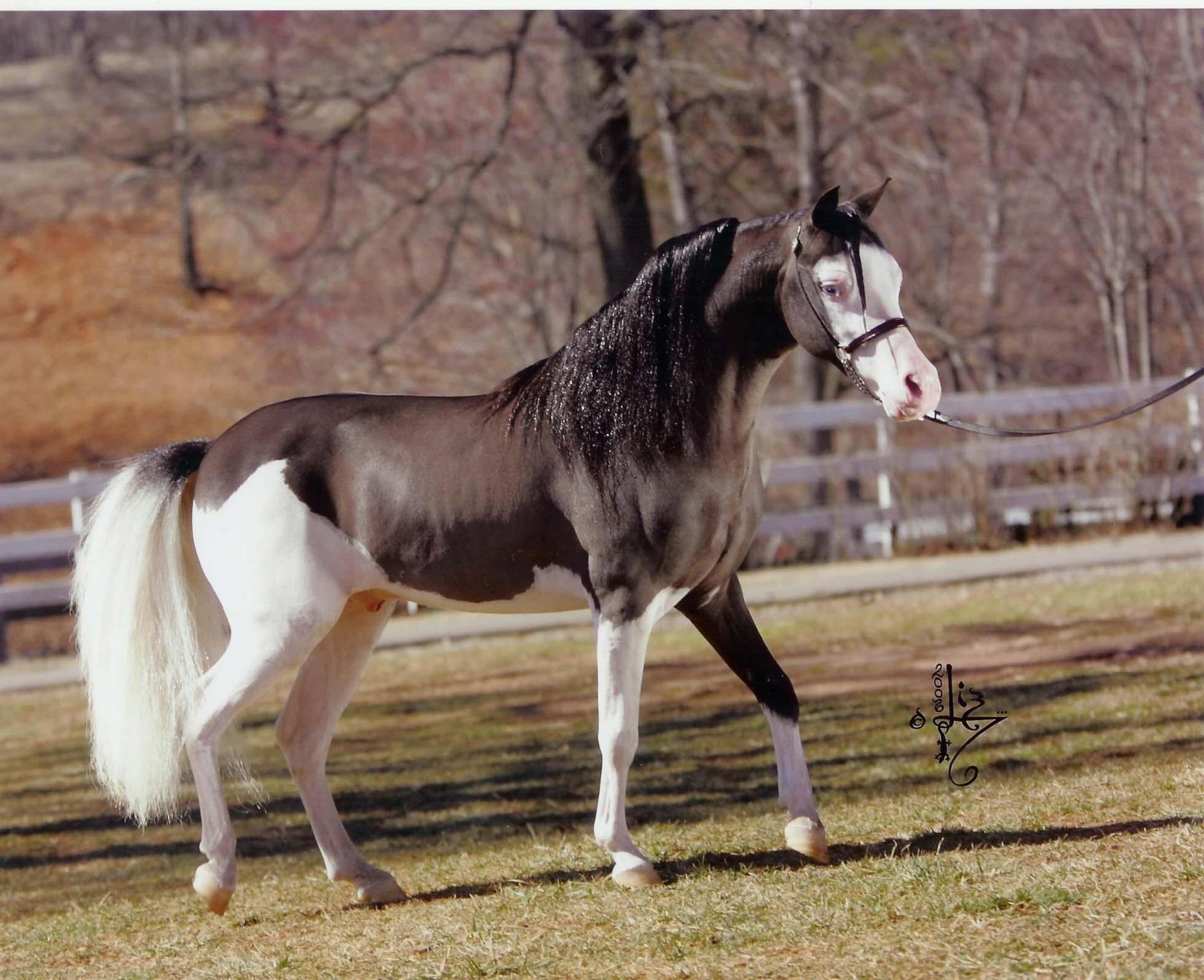 Самые редкие красивые и необычные масти лошадей в мире - домашний уют от agrostroy2.ru