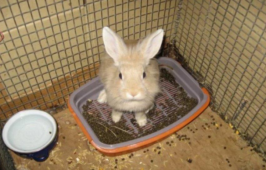 Как приучить кролика к лотку: пошаговая инструкция, советы и рекомендации