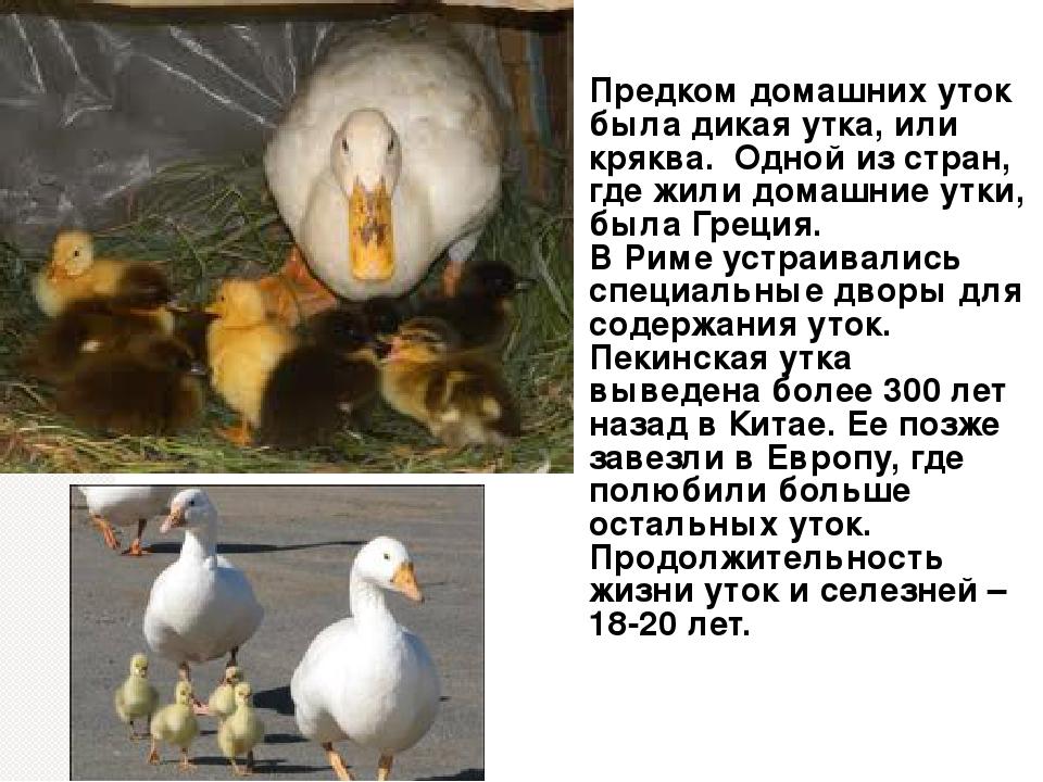 Сколько лет живут амадины? продолжительность жизни птицы в домашних условиях и в неволе. как влияет количество линек, уход и содержание на срок жизни амадина?