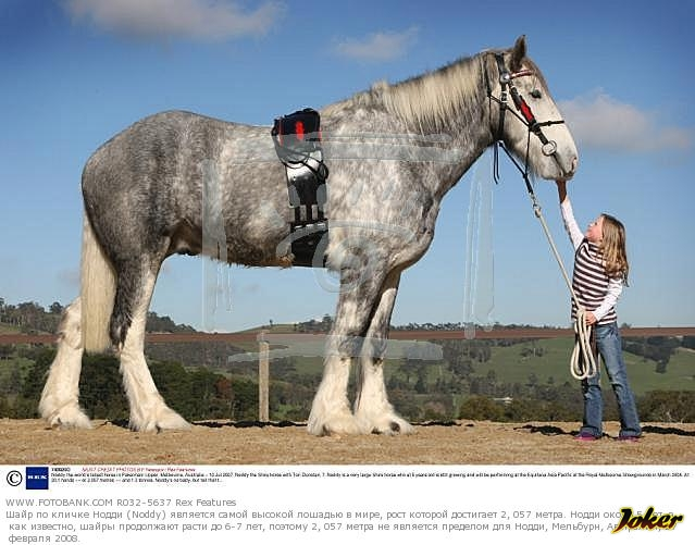 Вес спортивной лошади