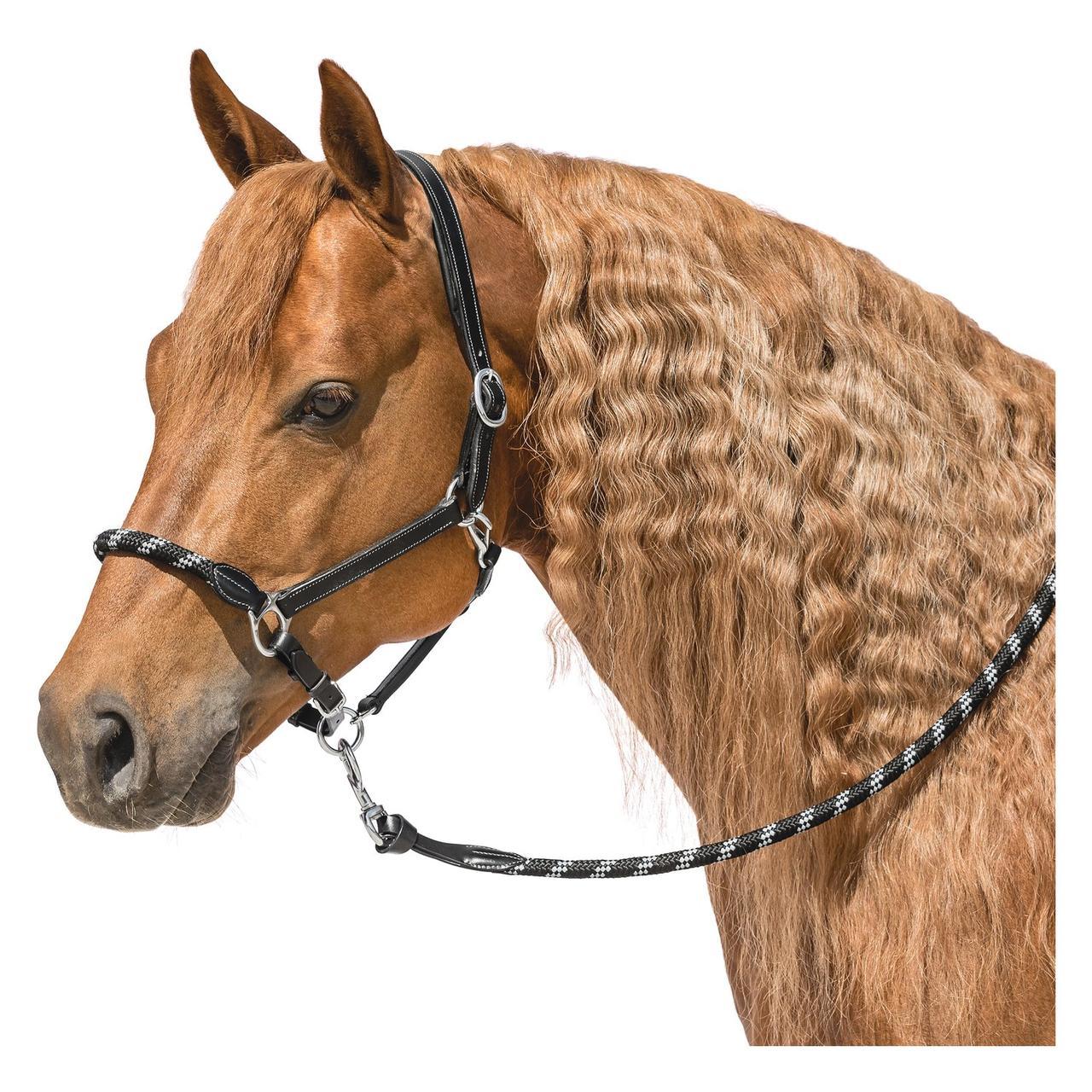 Уздечка и недоуздок для лошади, узда своими руками