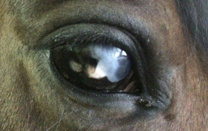 Зачем лошадям закрывают глаза по бокам - рыболовный караван