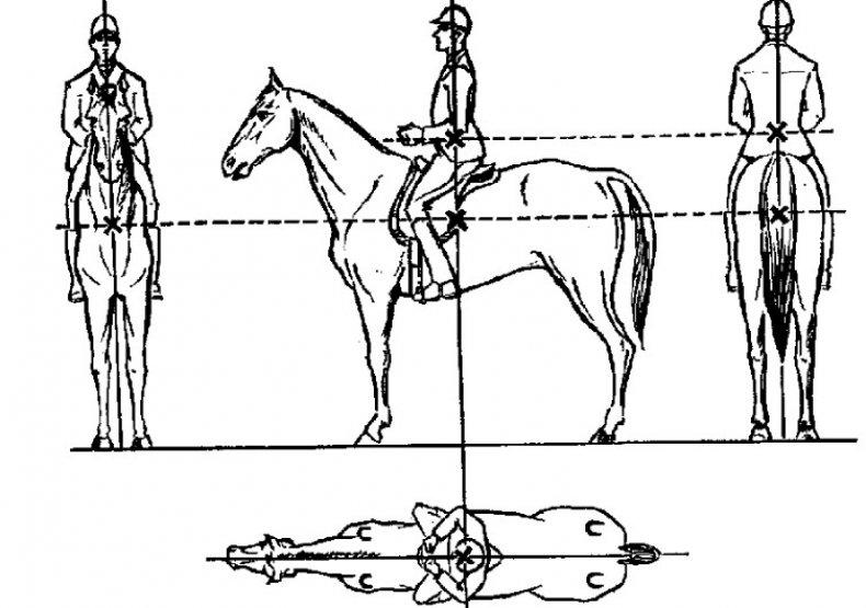 Обучение верховой езде – советы и наставления