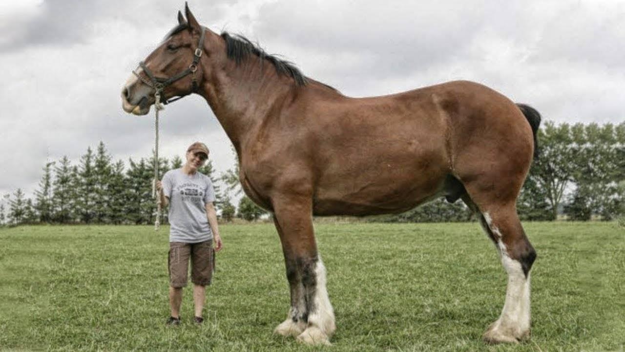 Топ знаменитих коней світу: анілін, абсент, болд рулер, болівар, зеньятта, сухар | догляд за тваринами
