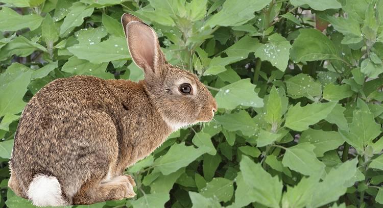 Можно ли кормить кроликов хлебом и как правильно это делать?