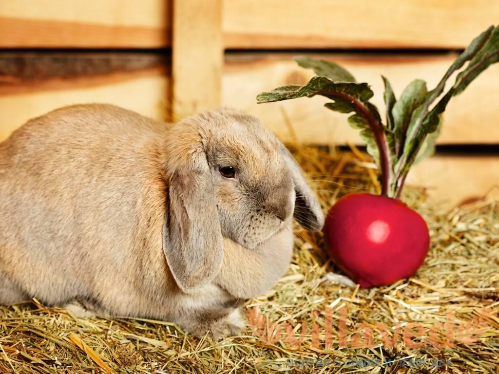 Можно ли давать кроликам помидоры и помидорную ботву: как кормить и в каких количествах