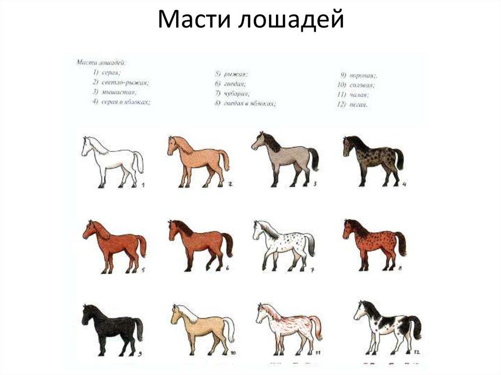 Соловая масть лошади: фото и характеристика | мои лошадки