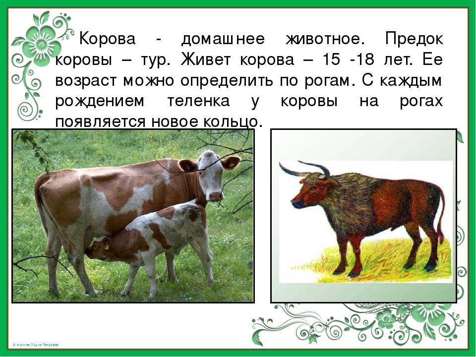 Сколько сена надо корове на зиму – сколько нужно сделать запасов в тюках и кг