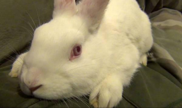 Почему кролик стучит лапами - oozoo.ru