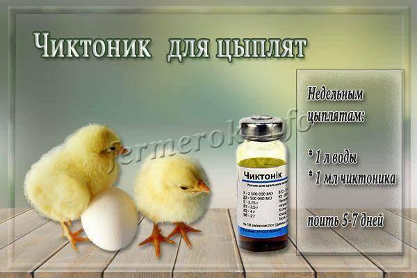 Чиктоник - инструкция по применению для птиц (цыплят бройлеров) в ветеринарии