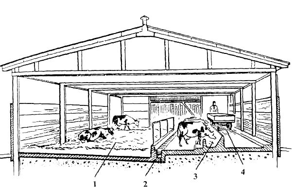 Как построить сарай (стойло, хлев) для быков и коров своими руками