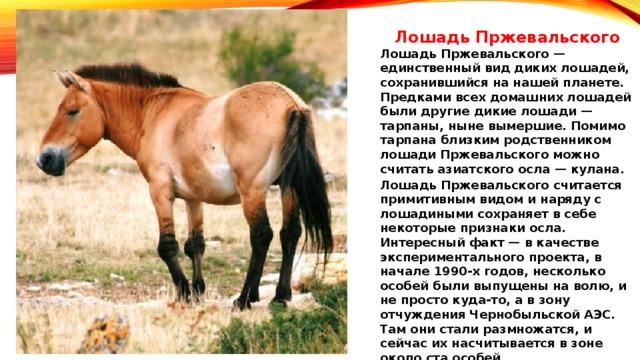 Лошади - прекрасные создания природы: что о них следует знать