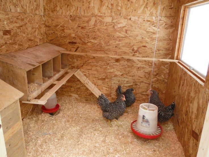 Как правильно построить курятник для кур-несушек?