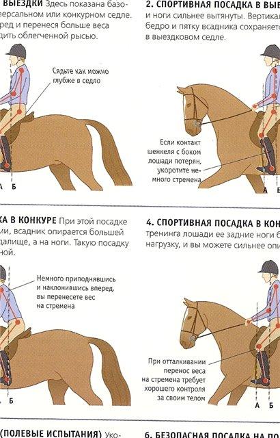 Как приручить лошадь? как завоевать её доверие?