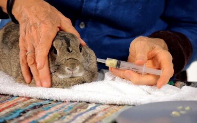 Что делать, если у кролика появился насморк