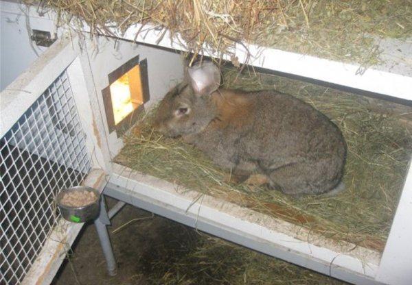 Содержание и уход за кроликами в зимнее время