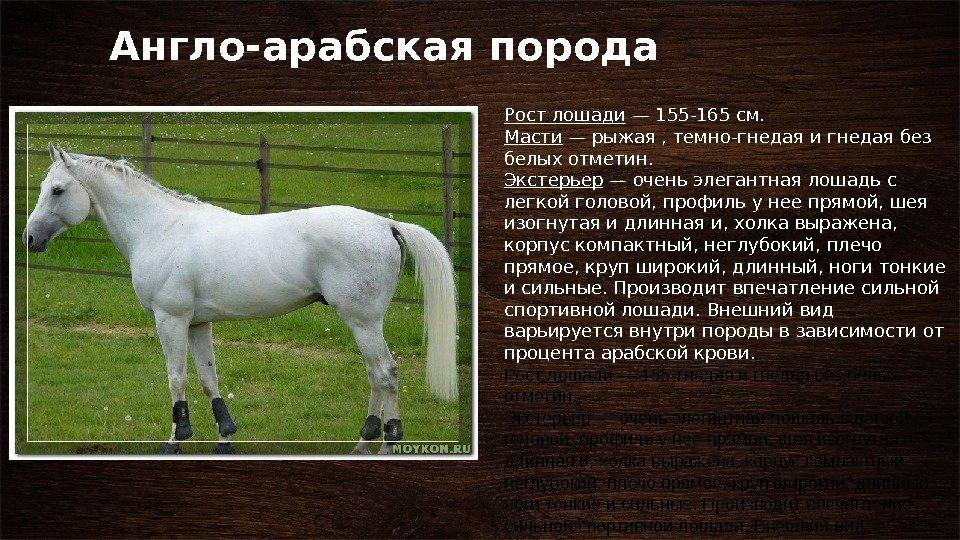 Мезенская порода лошадей: история, описание, фото | мои лошадки