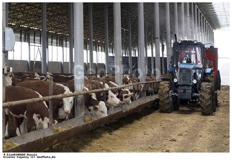 Организация молочной фермы с нуля: пошаговая инструкция