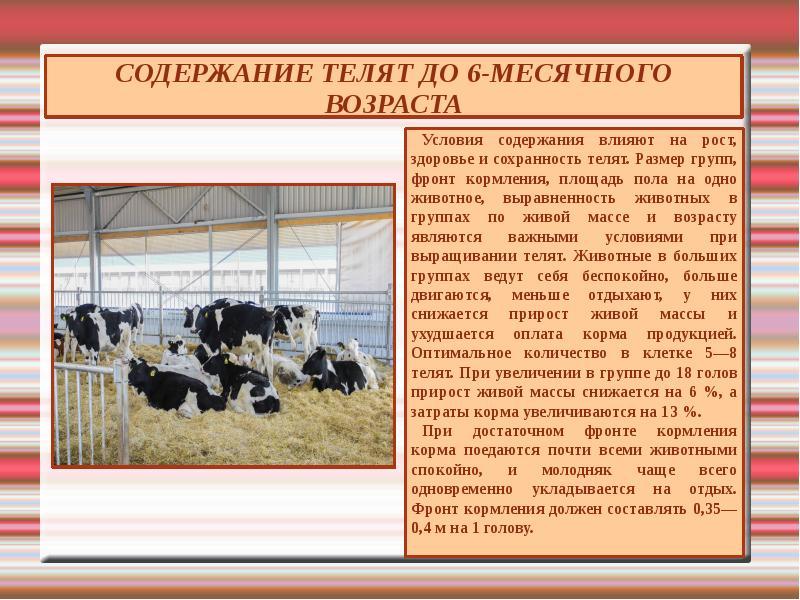 Содержание коровы в личном хозяйстве – от сарая до разведения 2020