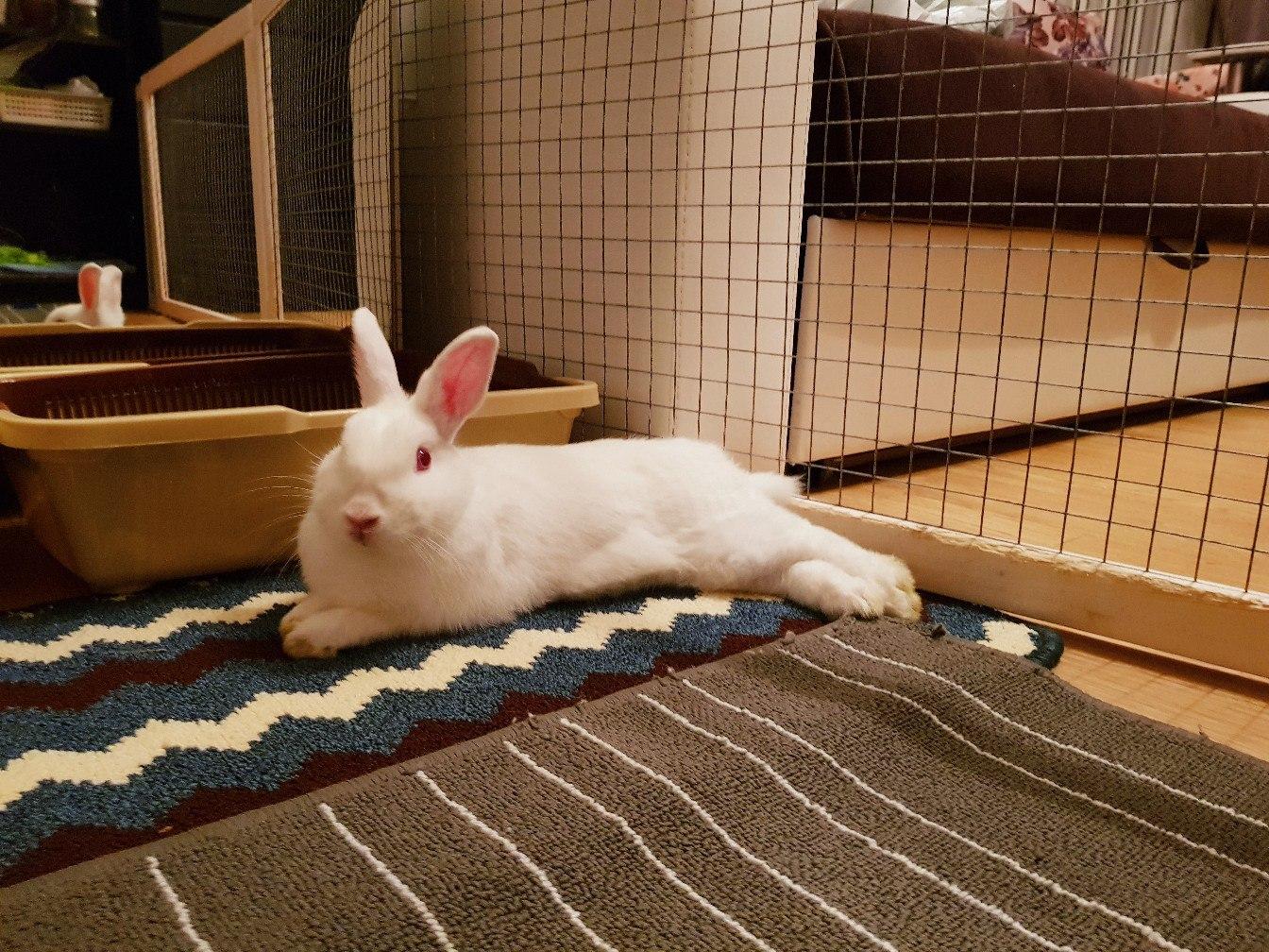 Кролики дерутся между собой. почему дерутся кролики