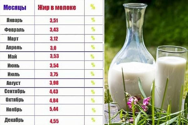 Жирность молока - какой процент дает корова 2020