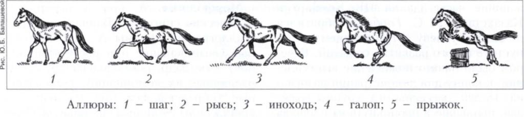 Виды бега лошади: шаг, рысь и галоп