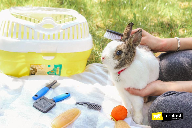 ✅ как ухаживают за кроликом в домашних условиях и чем кормят: как правильно - tehnomir32.ru