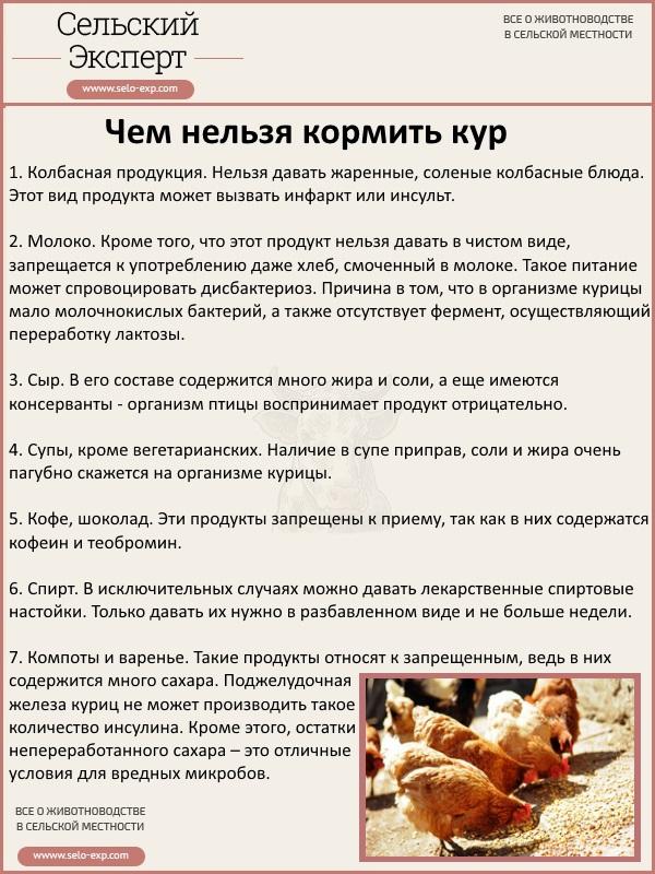 ✅ можно ли кормить кур сырой рыбой. рыба в рационе несушек - cvetochki-ulyanovsk.ru