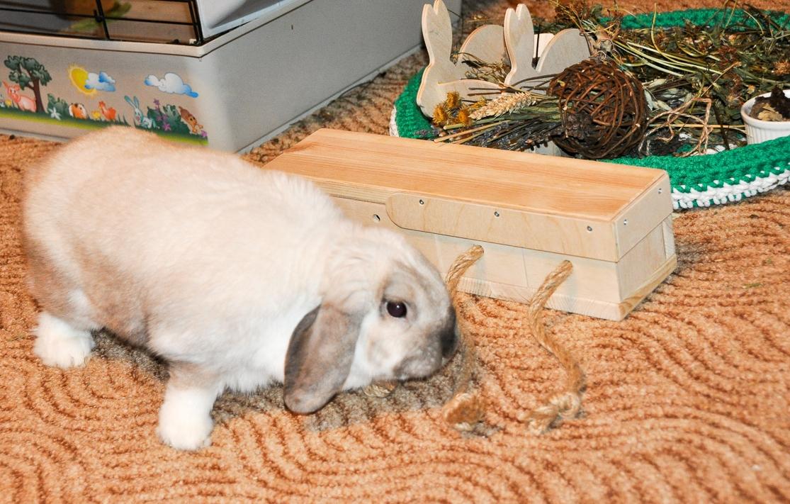 Что нужно для содержания декоративного кролика - новости о кроликах