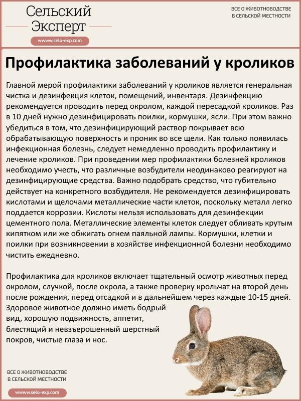 Профилактика и лечение кроликов от кокцидиоза.