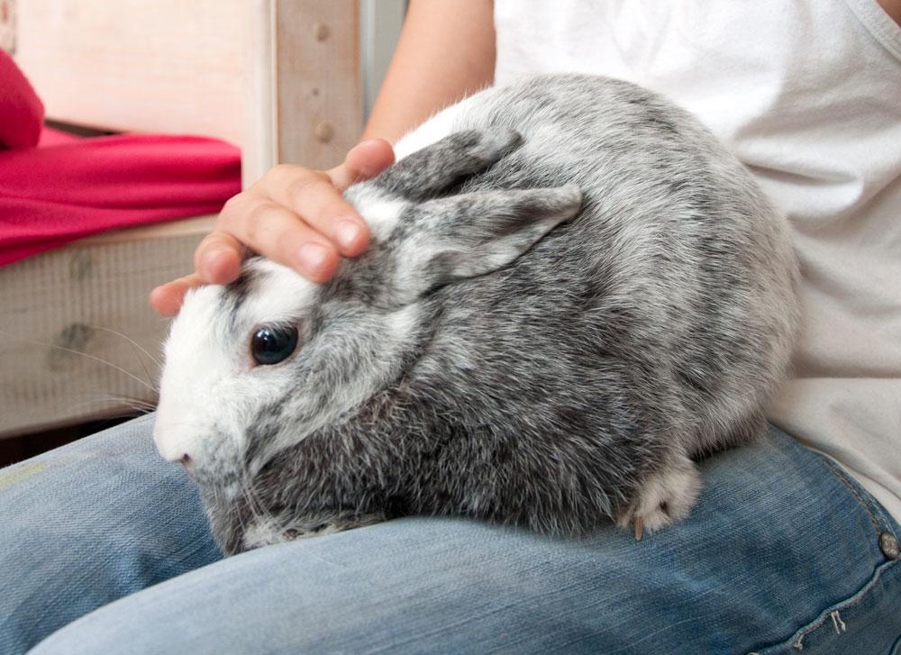 Сколько лет живут декоративные и обычные кролики, условия их содержания