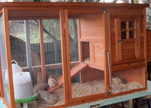 Можно ли держать кур и кроликов в одном вольере