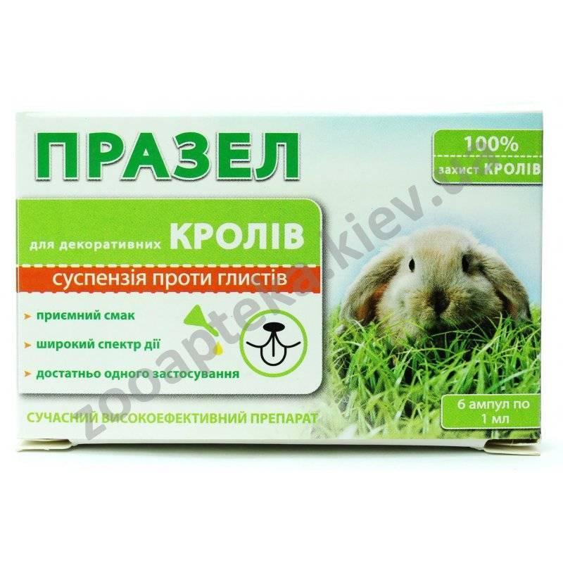 Глисты у кроликов: признаки, симптомы, профилактика и лечение