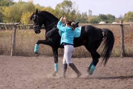 Как обучают лошадей