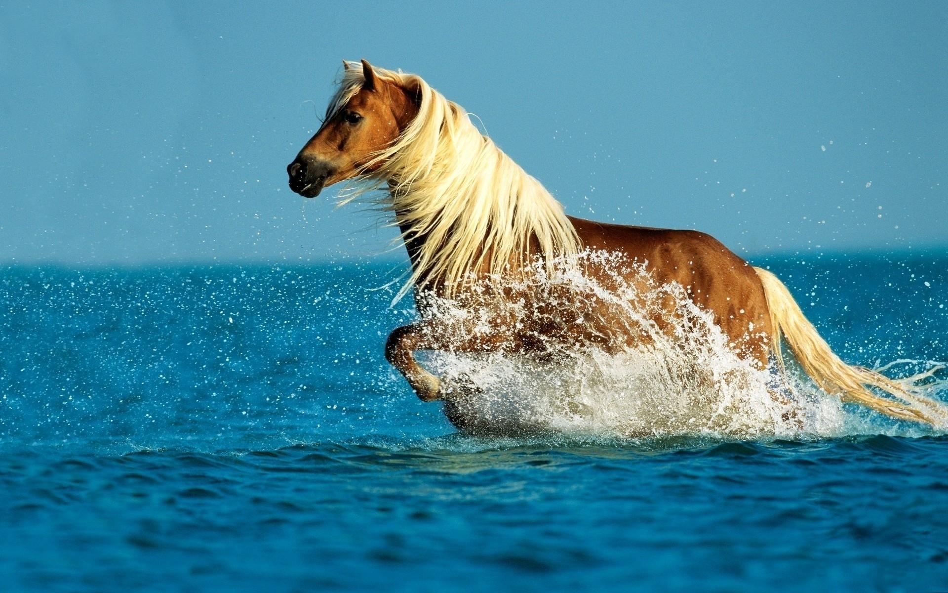Лошади умеют плавать? каким образом плавают кони?