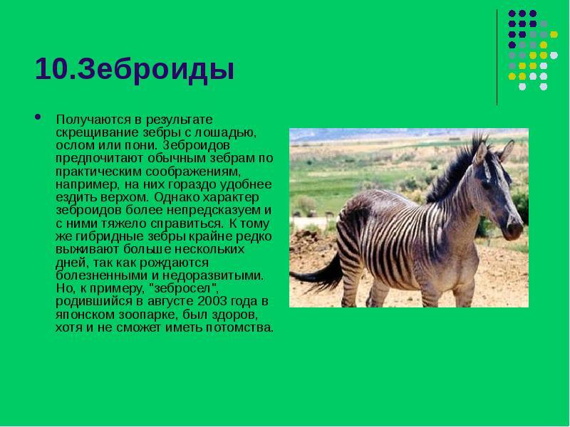 Топ-25: удивительные гибридные животные, которых стоит увидеть