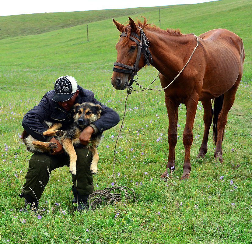 Как приручить лошадь?