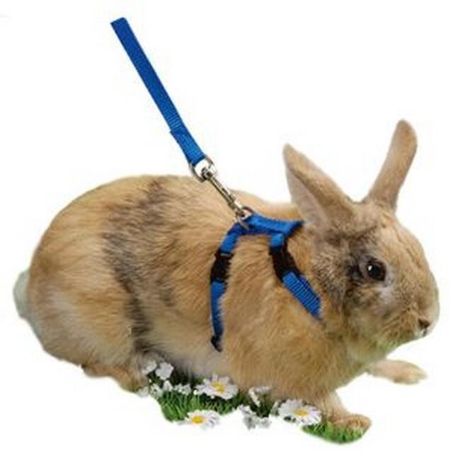 Как сделать шлейку своему кролику?